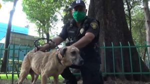 policías regalan apapachos en albergue de caninos