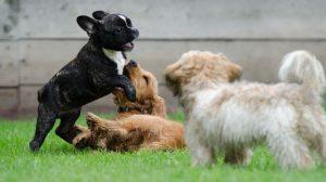 prevenir enfermedades transmitidas por animales