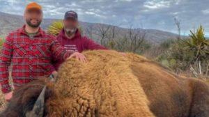 bisonte americano en Coahuila