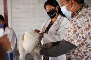 campaña de vacunación antirrábica gratuita en Azcapotzalco
