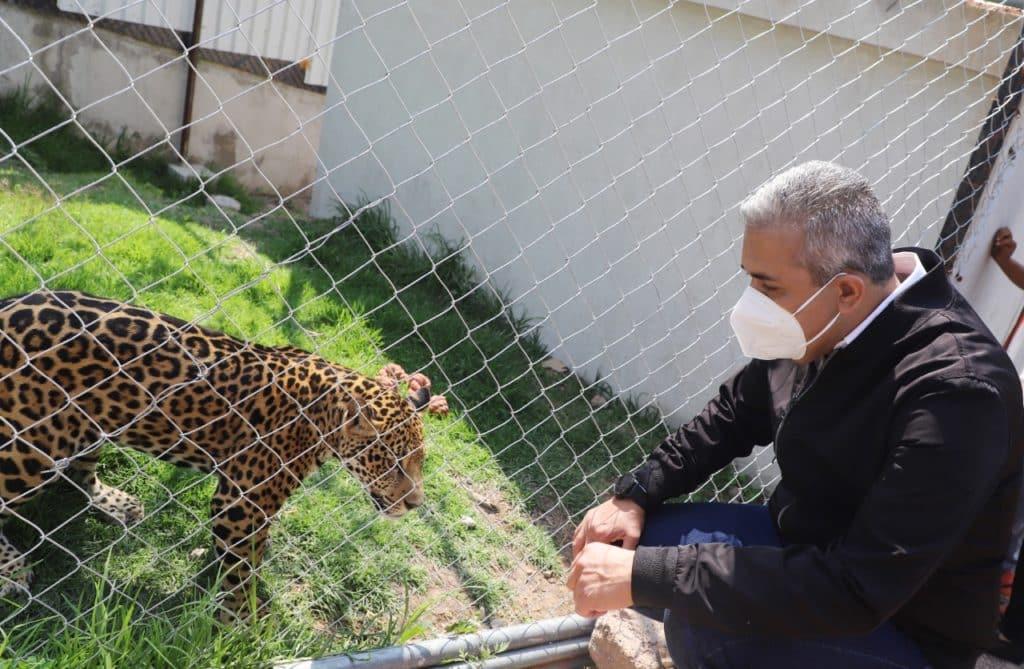 Ecatepec hábitat para jaguar